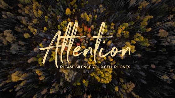 Fall Trees (Silence Phone)