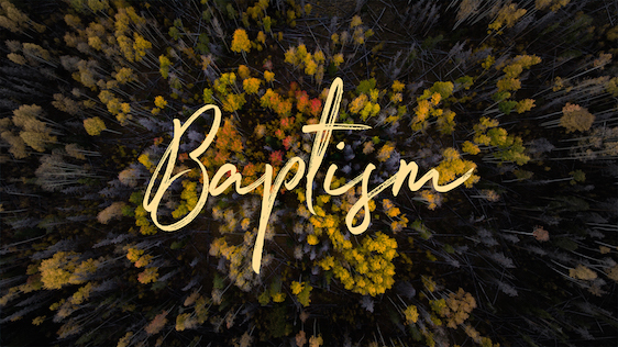 Fall Trees (Baptism)