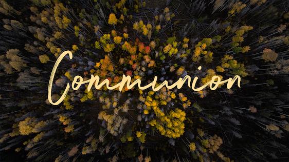Fall Trees (Communion)