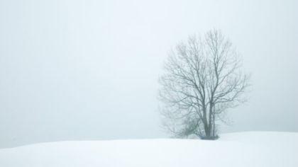 Nature & The Curse