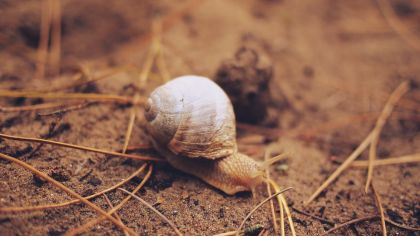 The Snail's Journey To The Ark